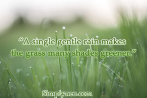 A single gentle rain makes the grass many shades greener.