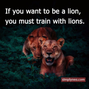 """If you want to be a lion, you must train with lions."" ~Carlson Gracie Inspirational life quotes, motivational quotes, life quotes"